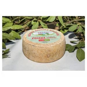 Pecorino cheese Poiana Bio - Floris